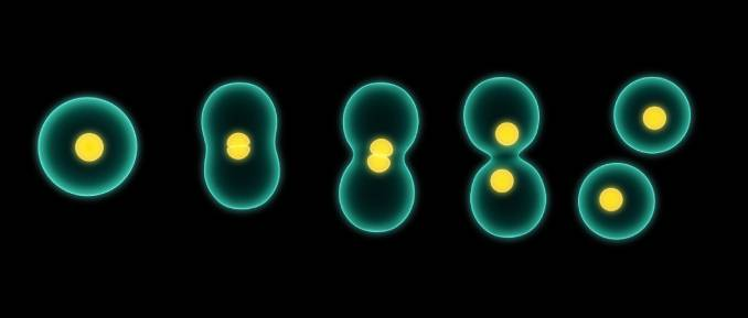 Insight Into the Inheritance of Epigenetic Marks