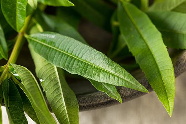 Compound in lemon verbena may help normalize lipid metabolism in diabetics