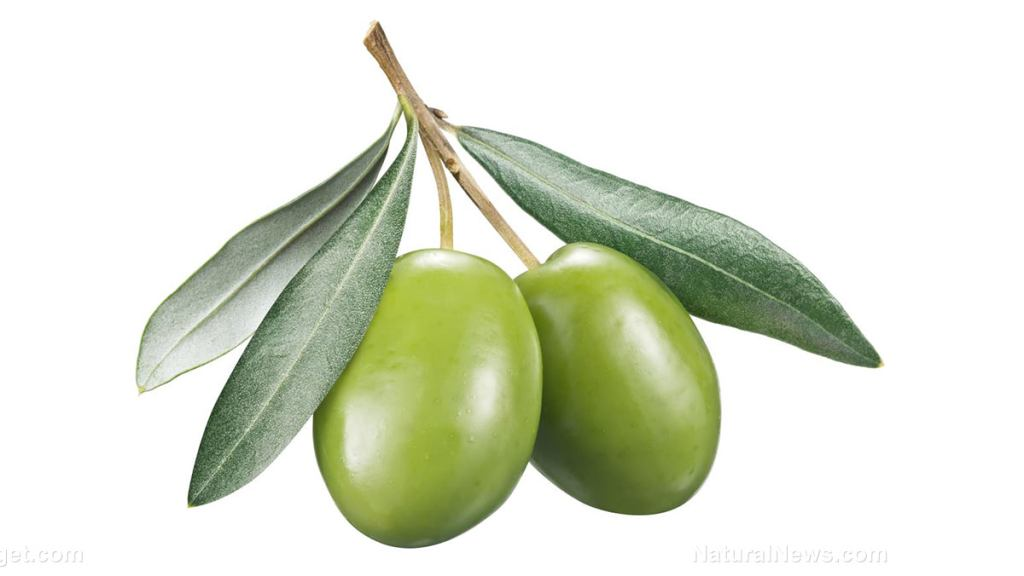 A potential cholesterol-lowering agent in olive leaves?
