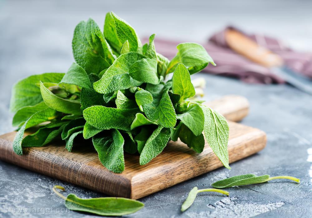 Medicinal properties of sage revealed