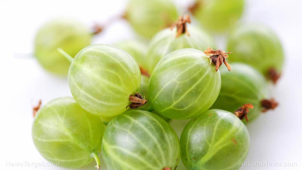 Antioxidants in Indian gooseberry help maintain cardiovascular health and boost immunity