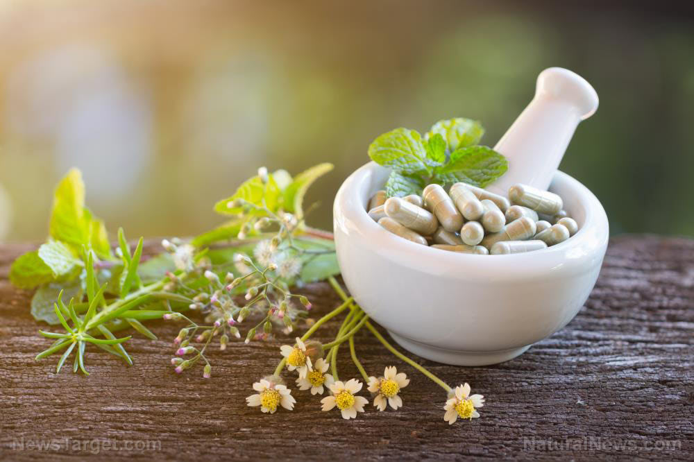 Identifying the anti-inflammatory activity of Ayurvedic plants with steroidal saponins