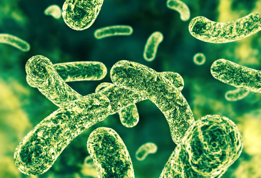 Probiotics improve cellular immune function in elderly