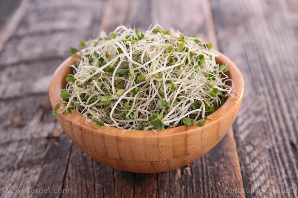 Sprouting 101: A quick and easy guide to get you started