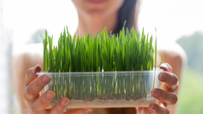 Easy to grow and nutrient-rich: Considerations and instructions for sprouting