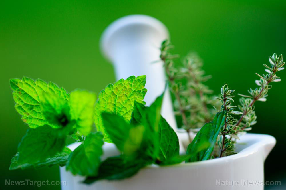 Researchers evaluate the antidiabetic activity of Mentha arvensis (wild mint)