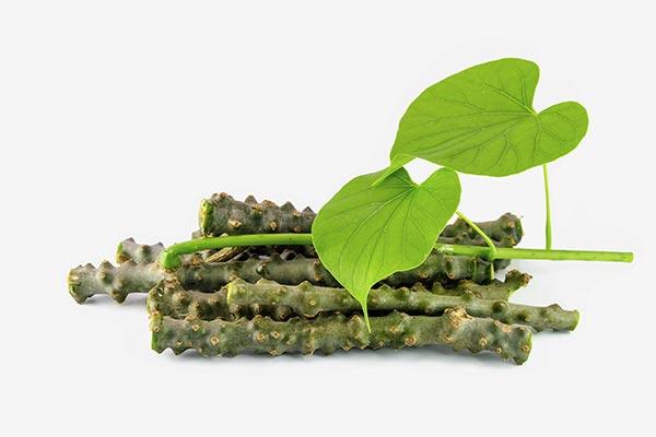 Exploring the inhibitory activity of Tinospora cordifolia (heart-leaved moonseed) against diabetes symptoms
