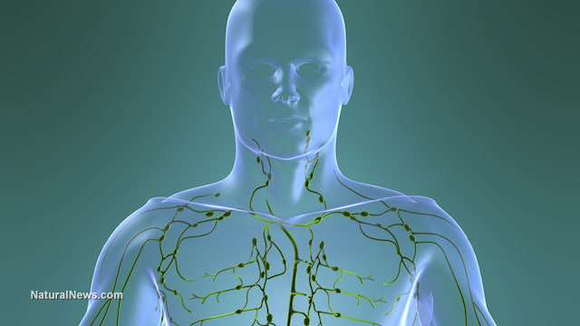 Learn about the Importance of a Healthy Lymphatic System