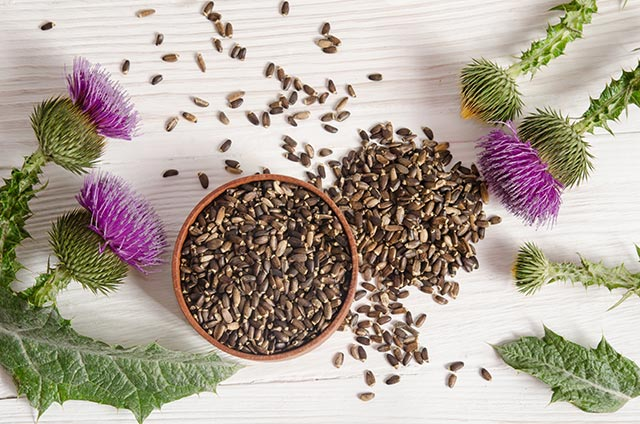 Learn how to make milk thistle extract, the all-purpose remedy for preppers