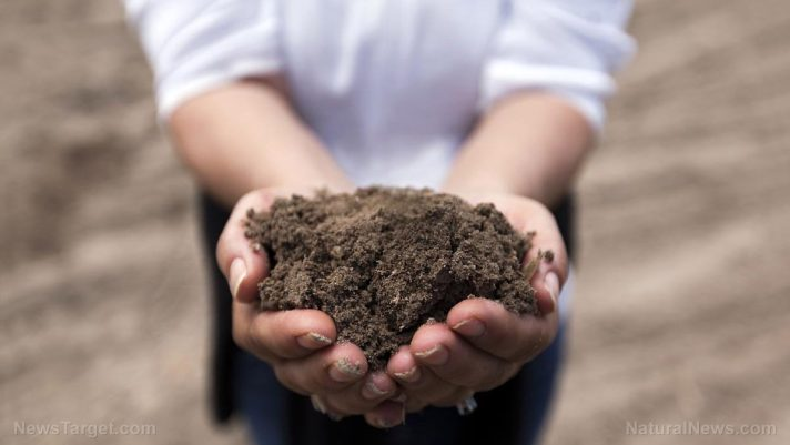 Crops absorb pharmaceuticals from sewage sludge spread on farmlands