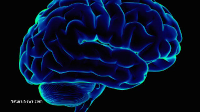 Banned PCBs still present in population, affecting brain function after four decades
