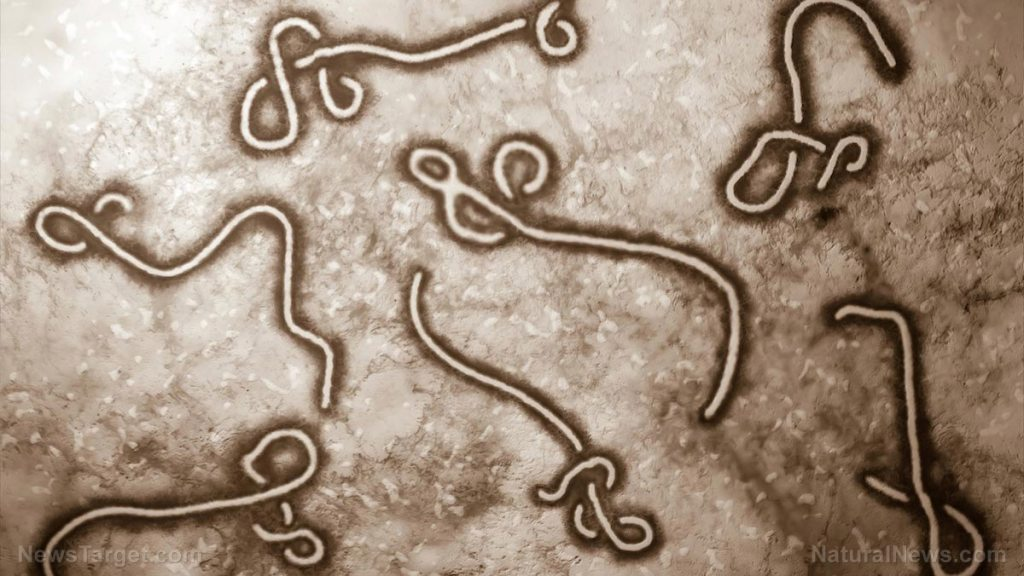 If Ebola remains in semen of infected men, why were male Ebola victims in US 'cleared' as virus-free?