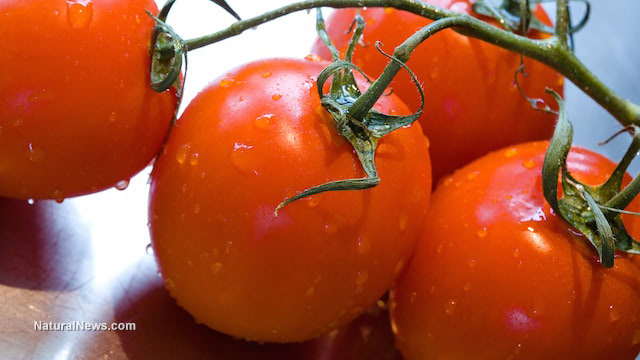 Tomato-rich diet may lower cancer risk, study shows