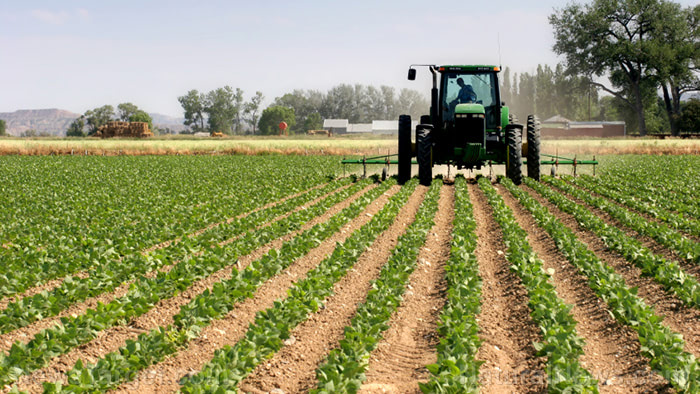 California is going after another dangerous pesticide: Chlorpyrifos has been linked to brain damage