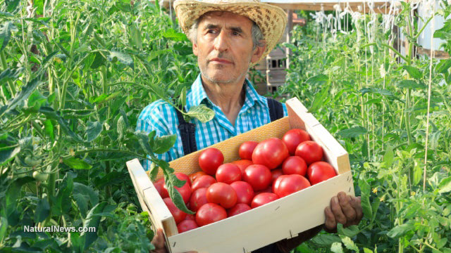 Add tomatoes to your diet for numerous health benefits