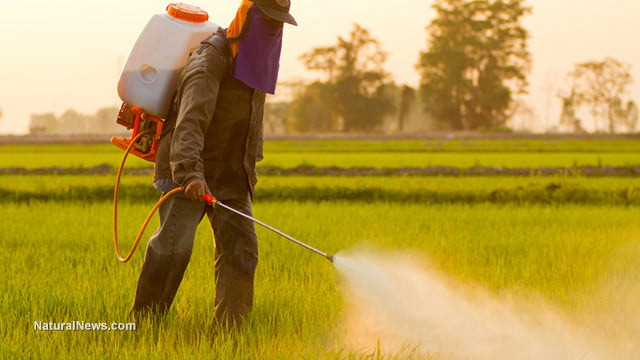 Glyphosate - The silent danger causing lead poisoning in pregnant women