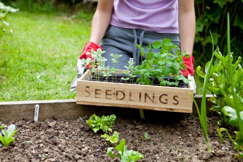 California communities learn to become self-sufficient with mini gardens