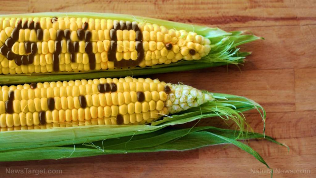 GMO corn driving up use of dangerous pesticides