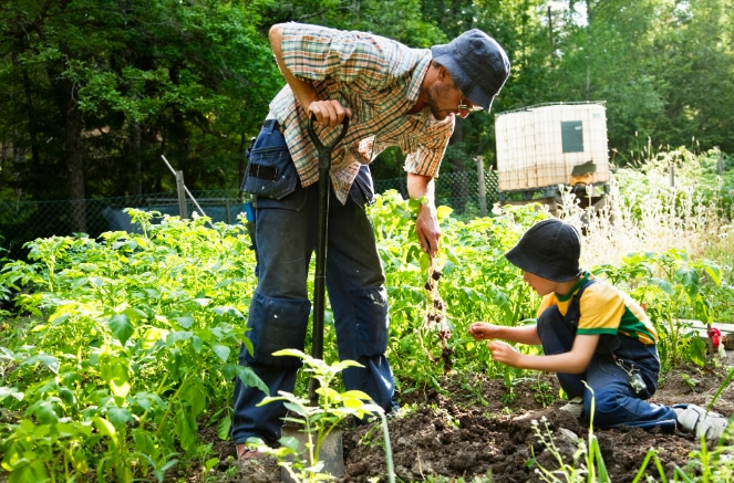 Essential homesteading skills for self-sufficiency