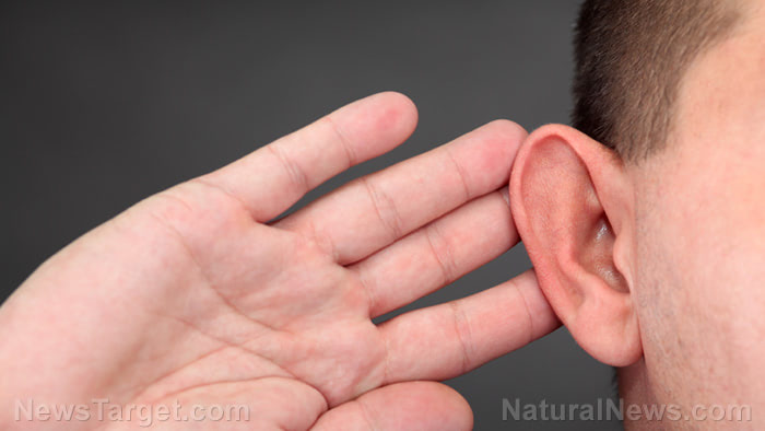 Age related hearing loss halted with folate nutrient