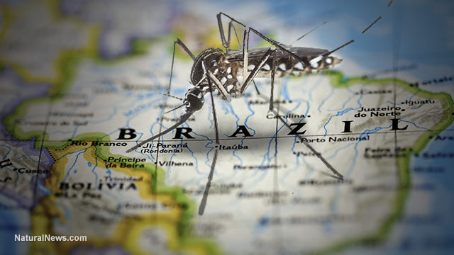 ZIKA DOOMSDAY HOAX UNRAVELS: Predicted 'explosion' of brain defects didn't happen... entire scare campaign was manufactured