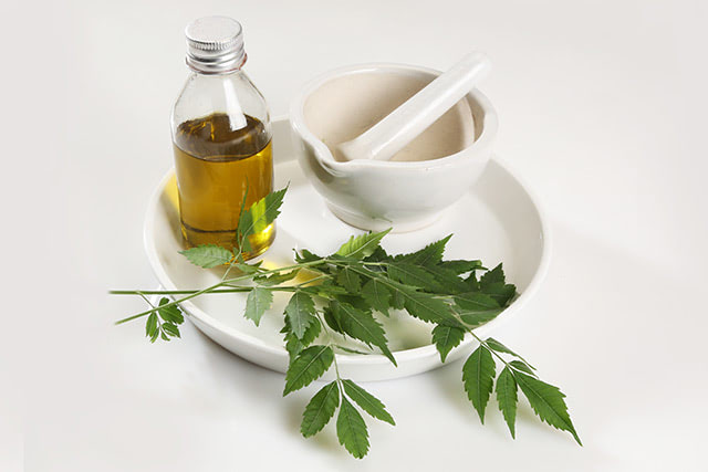 More than a natural pest repellent: Use neem oil to boost your hair and dental health
