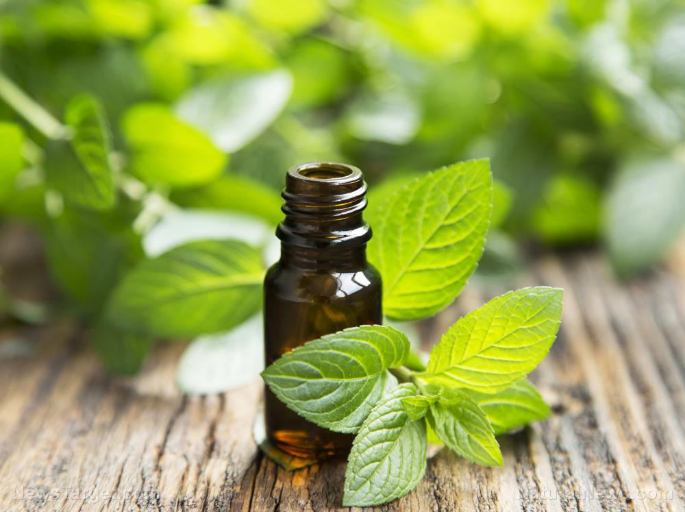 10 ways peppermint oil improves your health