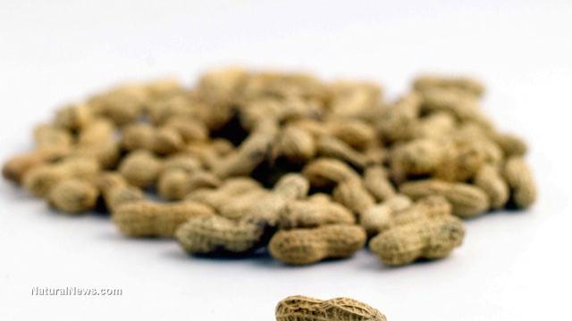 Peanut allergy 'phenomenon' solved