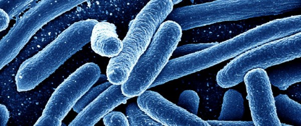 Vitamin B3 may be the cure for drug-resistant superbug infections