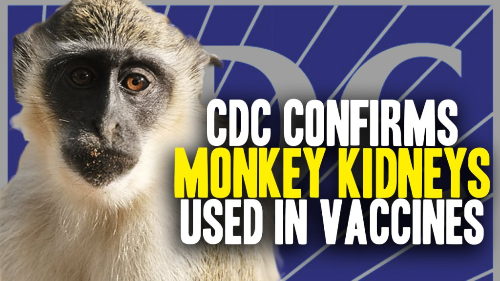 How many African Green Monkeys are infected, euthanized and then organ harvested each year to make FDA-approved vaccines?