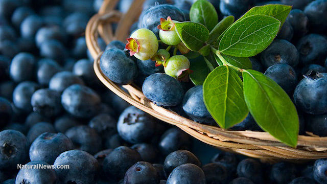 Blueberries: superfood for the heart