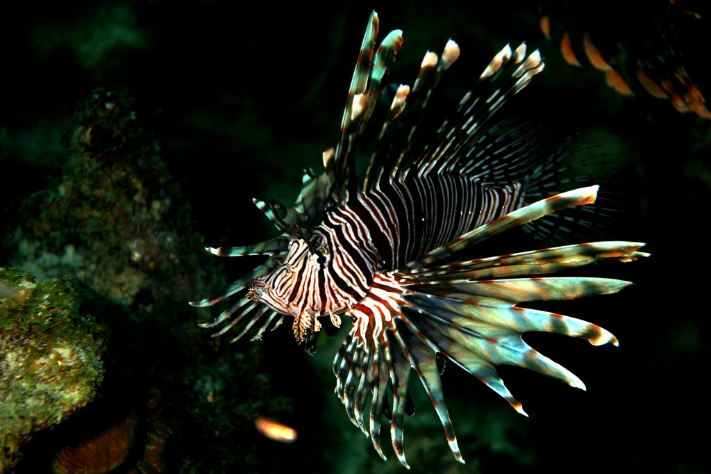 Updating fluid-powered machines: Scientists design bizarre-looking lionfish powered by a blood-like compound