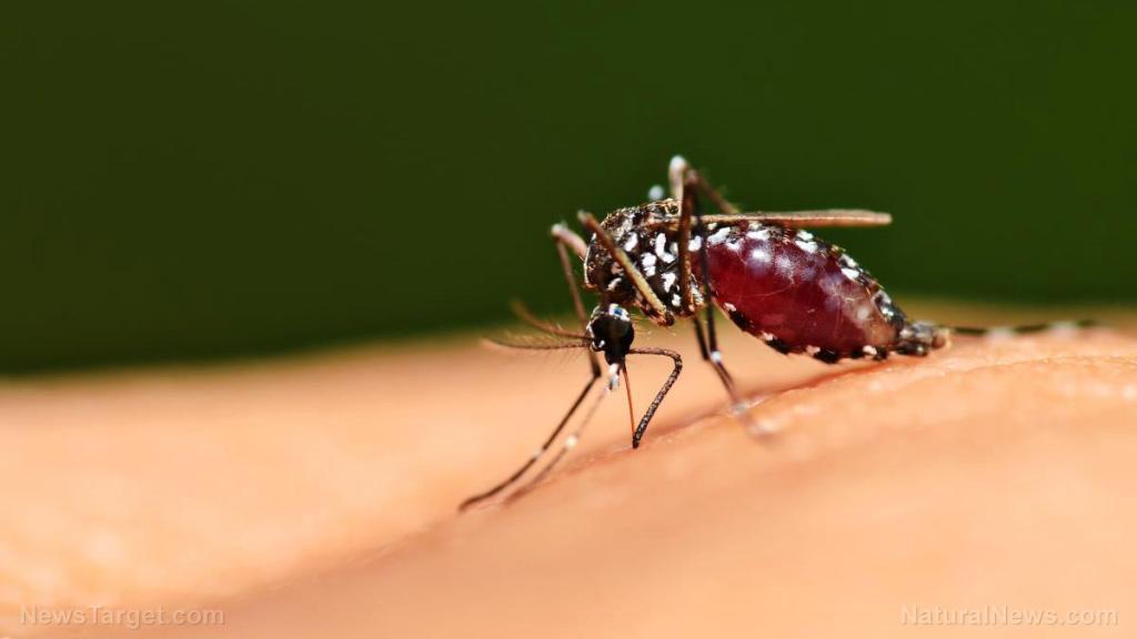 'Halt this nightmare': Alarm as Florida set to begin release of genetically engineered mosquitoes