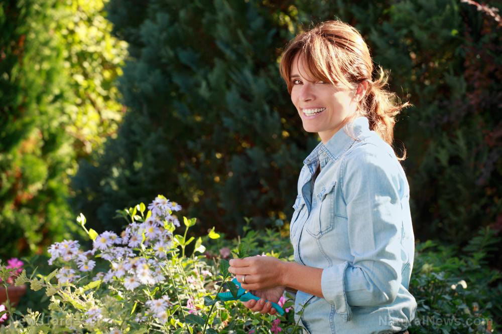 Use horticultural vinegar as a natural herbicide