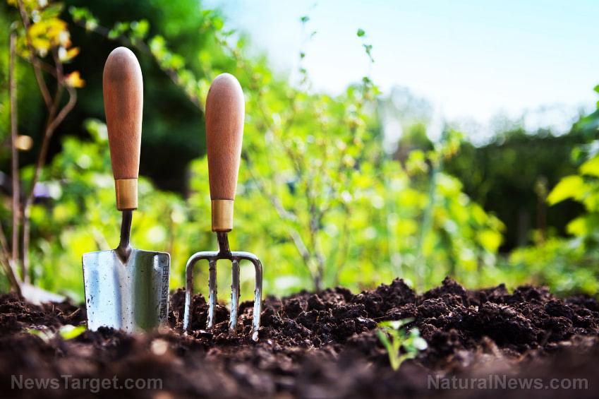 Natural weed control: 9 Herbicide-free tricks
