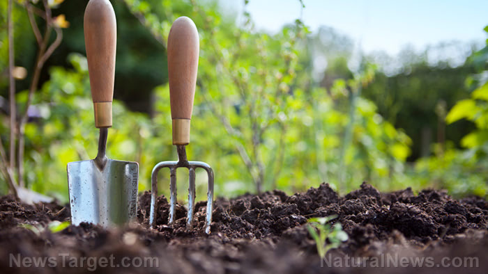 What to do if your survival garden dies