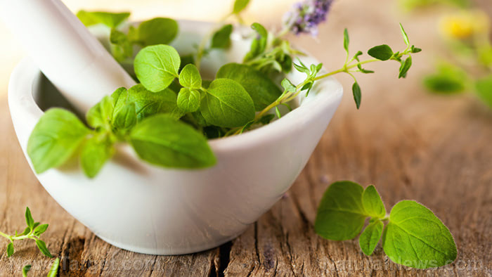 Start planting these perennial herbs today; not only do they taste good, they can be used as medicine when SHTF