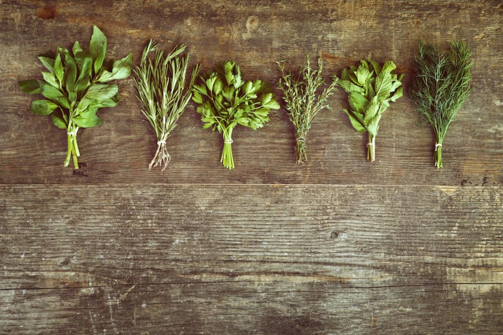 4 Wild medicinal plants to harvest for profit