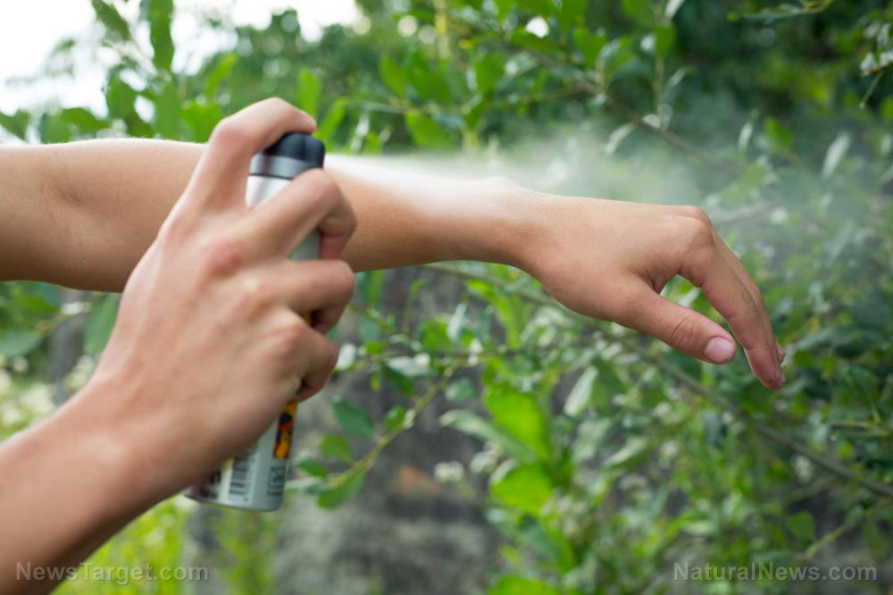 5 Plants that can keep mosquitoes away from your home