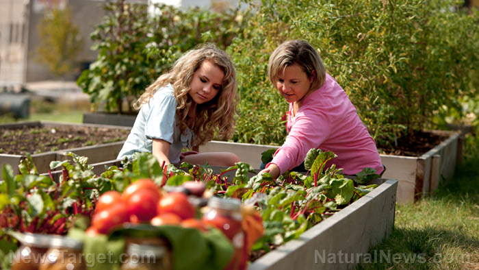 Survival essentials: Here's why you should grow food in your home garden before SHTF