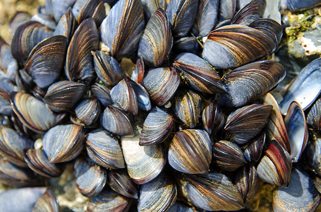 San Francisco Bay shellfish found to be contaminated with four different types of toxins