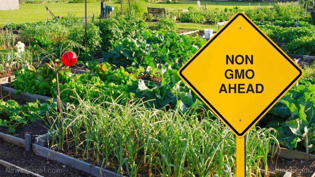 """SHOCKER: Most products labeled """"Non-GMO"""" can still be grown with sewage sludge, antibiotics, growth hormones, hospital bio-waste, synthetic pesticides and Roundup"""