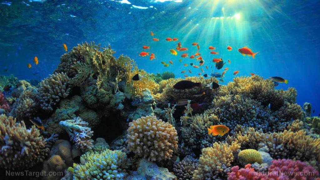 Small fish found to be essential to coral reef health by keeping them clean, according to new study