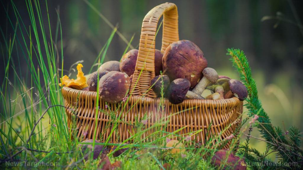 Is it edible? 3 easy steps to determine if you've found something edible in the wild
