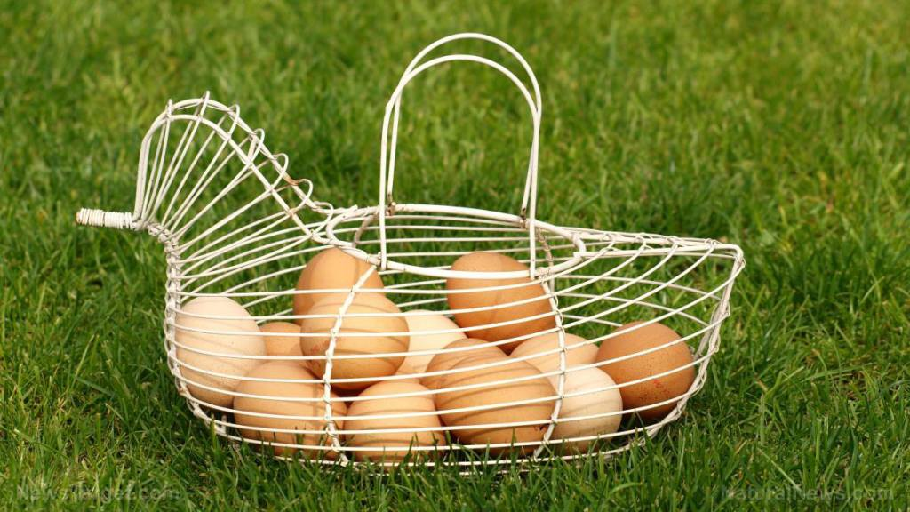 Farmers now eyeing chicken eggs produced in a sustainable manner