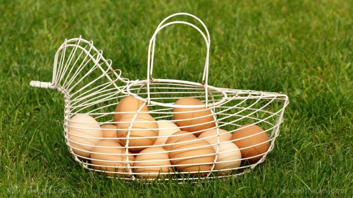 Food storage tips: 6 Traditional egg preservation techniques