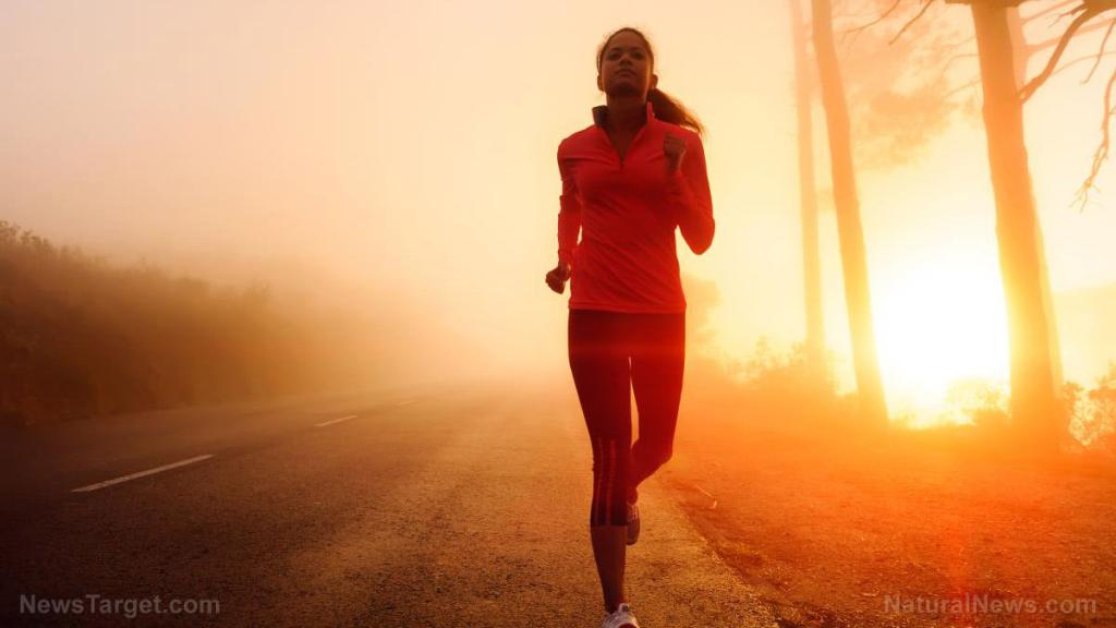 Study explains how diet, exercise and the endocannabinoid system contribute to healthy aging