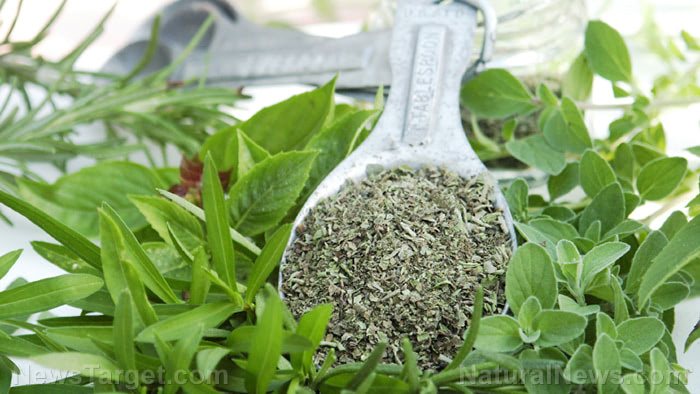 Oregano oil inhibits cancer growth, removes warts and more
