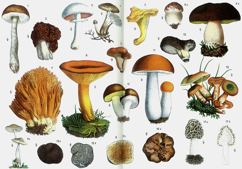 Don't poison yourself: 5 things to keep in mind when foraging for edibles in the wilderness