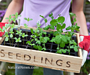 Seed starting 101: 4 Good reasons to start seeds indoors